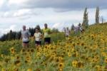 19. Loipersdorfer Buschenschank-Lauf + Nordic Walking