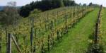 Die 100 besten Weine der Region